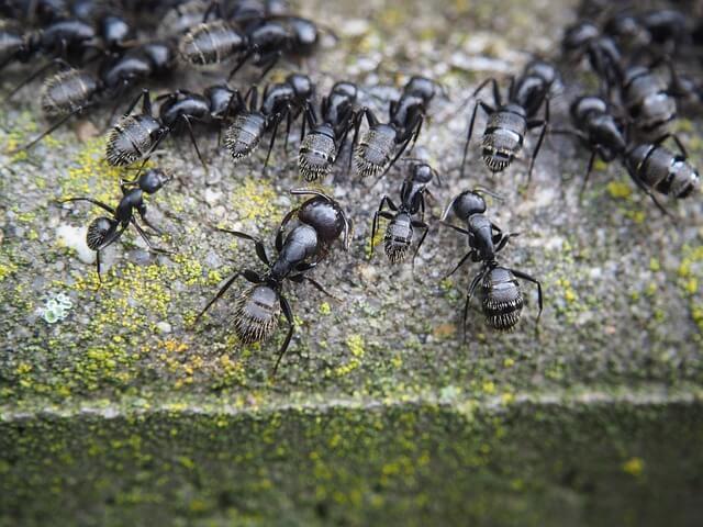 mieren nest Ongediertebestrijding in Nijmegen